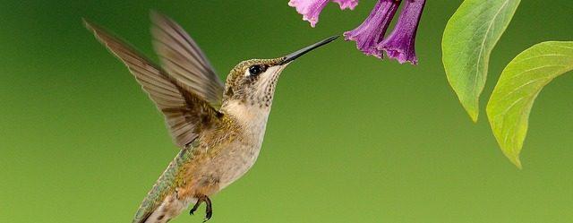 branding hummingbird